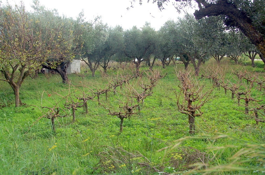 Image of The Good Life vineyard where people can spend grape picking holidays.
