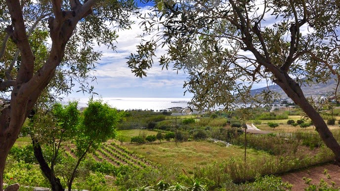 Image showing the view over The Good Life Greece vineyard where visitors can spend their holidays picking grapes.