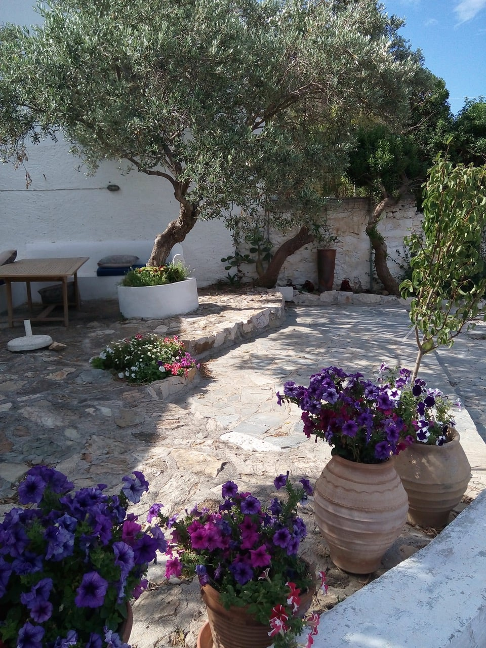 Picture of beautiful garden with olive trees.