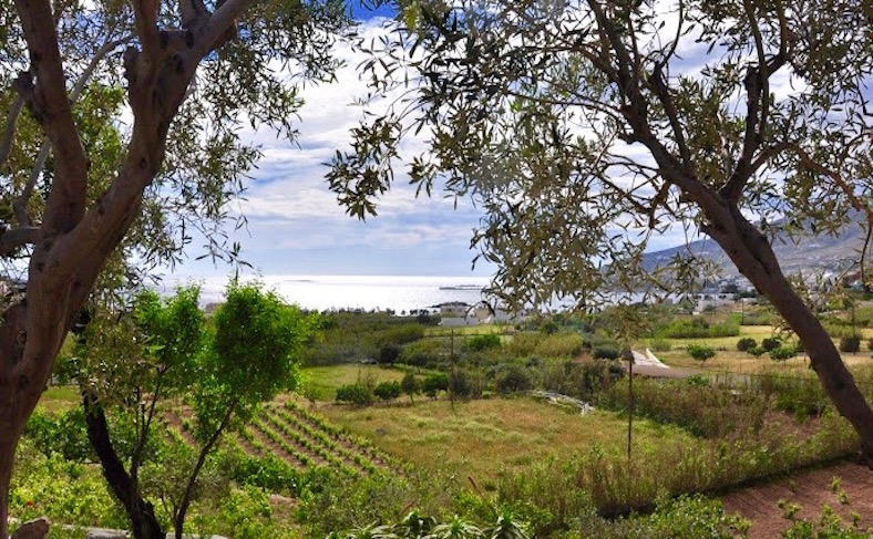 The view over The Good Life Greece vineyard in Poseidonia Syros, Greece.
